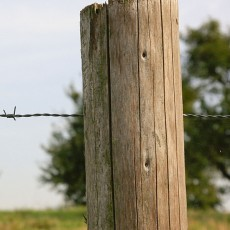 a fence, constructed of wooden posts and barbed wire